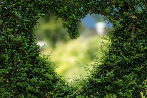 Jouw tuin, onze passie